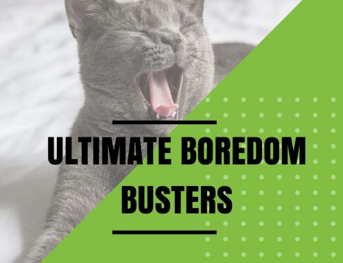 Ultimate List of Boredom Busters